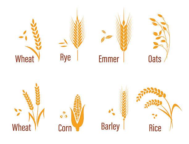 ilustrações de stock, clip art, desenhos animados e ícones de cereals icon set. - ilustrações de oats