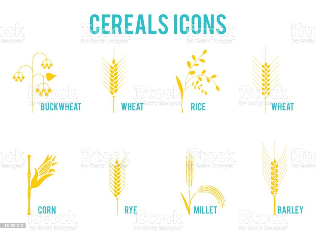 Cereals icons of grain plants. vector art illustration