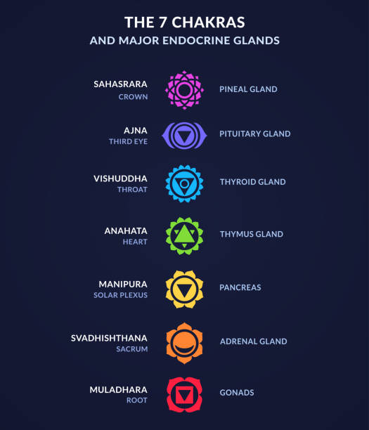 Chakra system infographic Infographic on body Chakras and corresponding endocrine system glands in human anatomy. Modern flat geometric style chakra icons. human gland stock illustrations