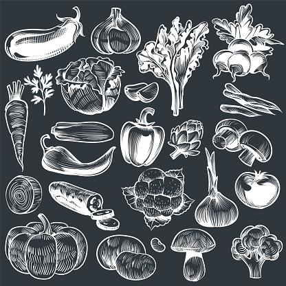 Chalk drawing of vegetables. Various vintage hand drawn vegetable, organic carrots broccoli eggplant, cabbage and mushroom, farming. Sketch vector set
