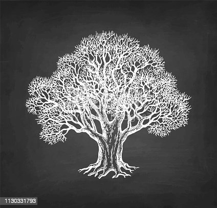 Chalk sketch of oak without leaves on blackboard background. Winter tree. Hand drawn vector illustration. Retro style.