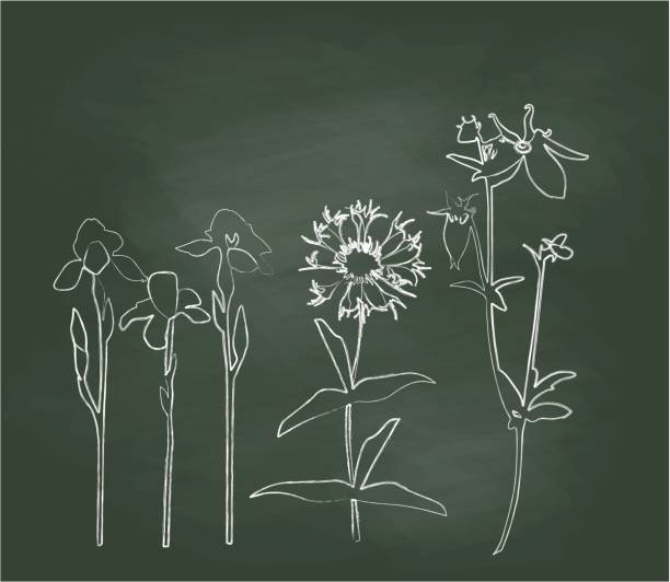 Chalkboard Hillside Wild Flowers Vector Illustration A chalk outline vector silhouette illustration of three types of wild flowers on a green background with white chalk. iris plant stock illustrations