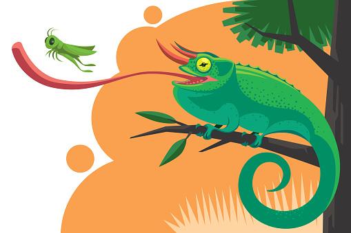 chameleon catching grasshopper
