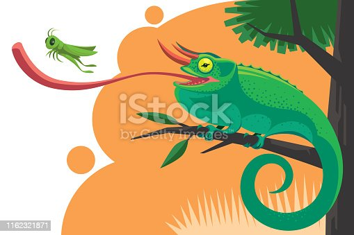 vector illustration of jackson's chameleon catching grasshopper