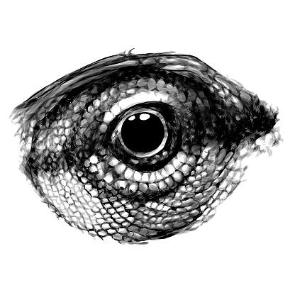 chameleon eye close-up in profile