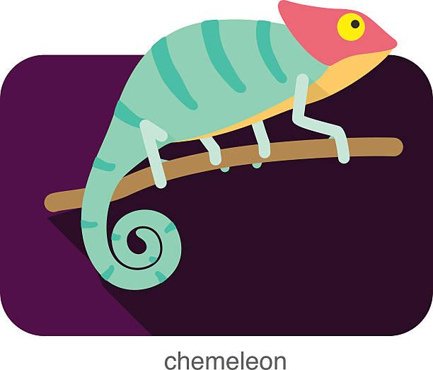 chameleon flat icon design. animal icons series. - chameleon stock illustrations