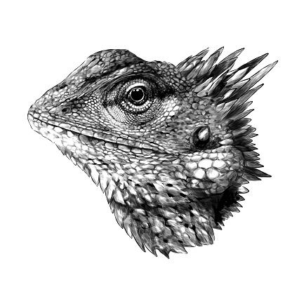 Chameleon head close up side profile