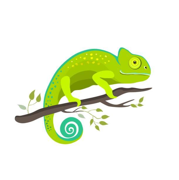 chameleon icon. cartoon illustration of walking chameleon vector for web - chameleon stock illustrations