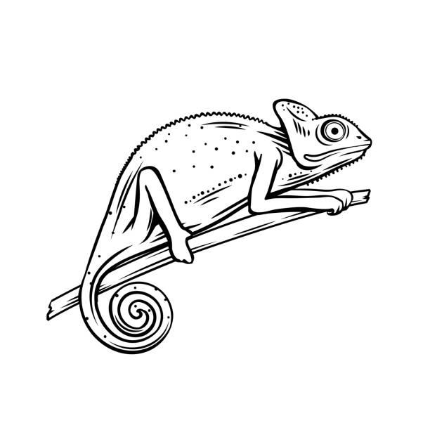 Chameleon outline icon Chameleon icon. Outline badge of chameleon animal for zoo design. Vector illustartion. chameleon stock illustrations