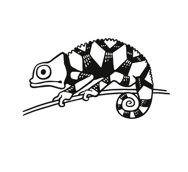 Chameleon Chameleon chameleon stock illustrations
