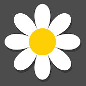 Chamomile flat vector icon on a grey background with shadow.Vector.