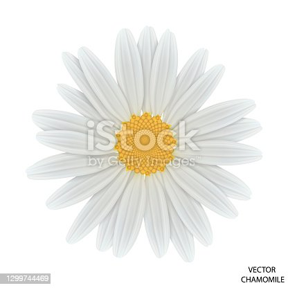 istock Chamomile flower top view. Close-up daisy. 1299744469