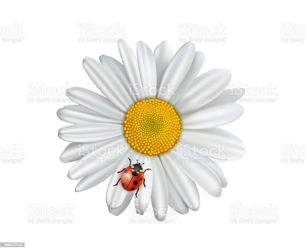 Kamomill Blomma Med Ladybird Prästkragar Med Lycka Charm ...