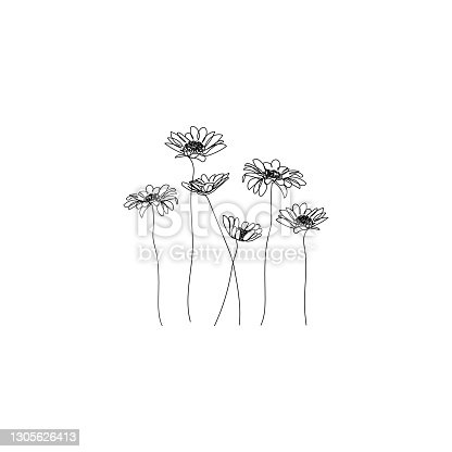 istock Chamomile flowers background. One line drawing. Minimalist line art. 1305626413