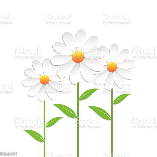 Chamomile flowers vector id915765048?b=1&k=6&m=915765048&s=612x612&h=qvjbmmm6mumcbokzm3zntxcistxsln2zmewup43rpk8=