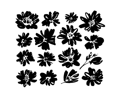 Chamomile hand drawn black paint vector set. Ink drawing flowers and plants, monochrome artistic botanical illustration.