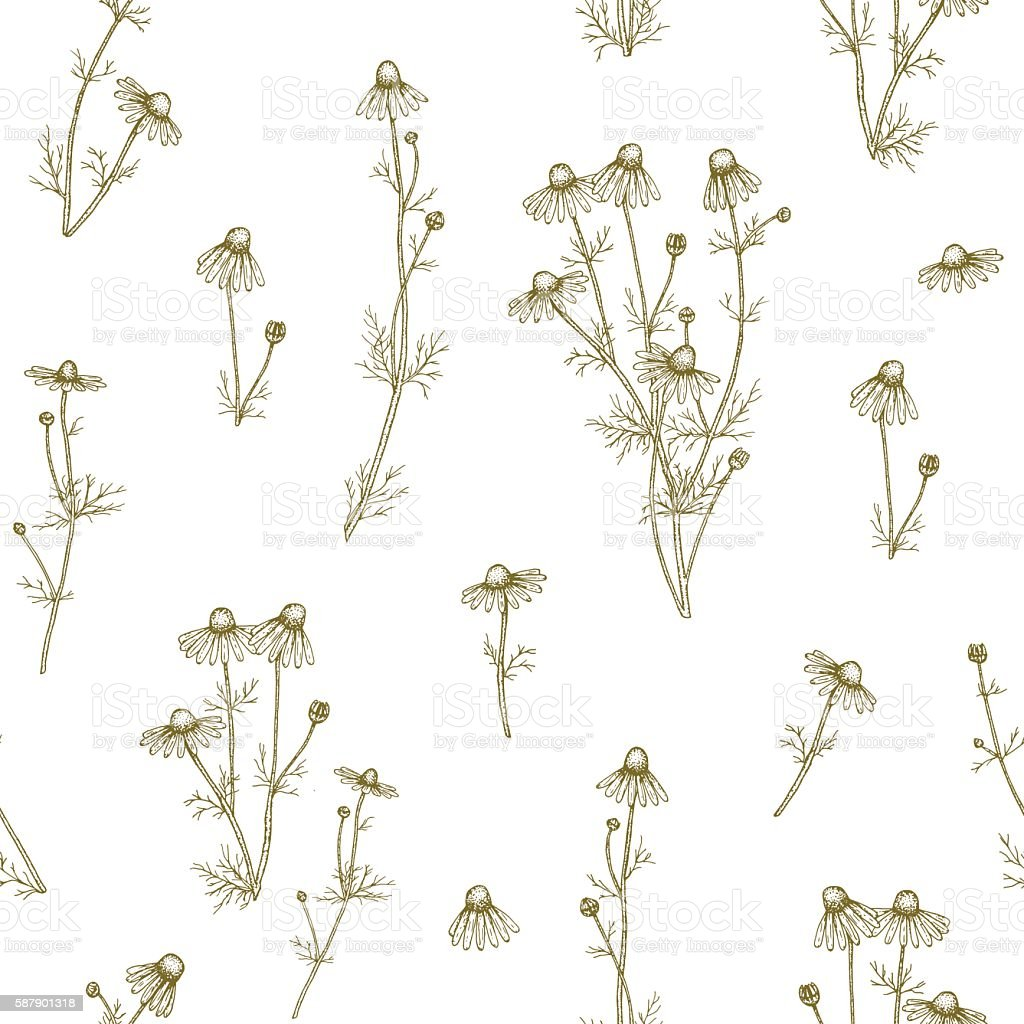 Chamomile pattern. vector art illustration