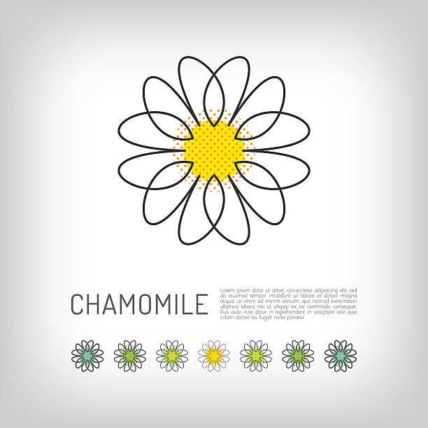 Chamomile thin line art icon, isolated daisy logo, abstract design Chamomile thin line art icon, isolated daisy logo, abstract flower design. Simple floral. Modern minimal design flower, Vector illustration chamomile plant stock illustrations