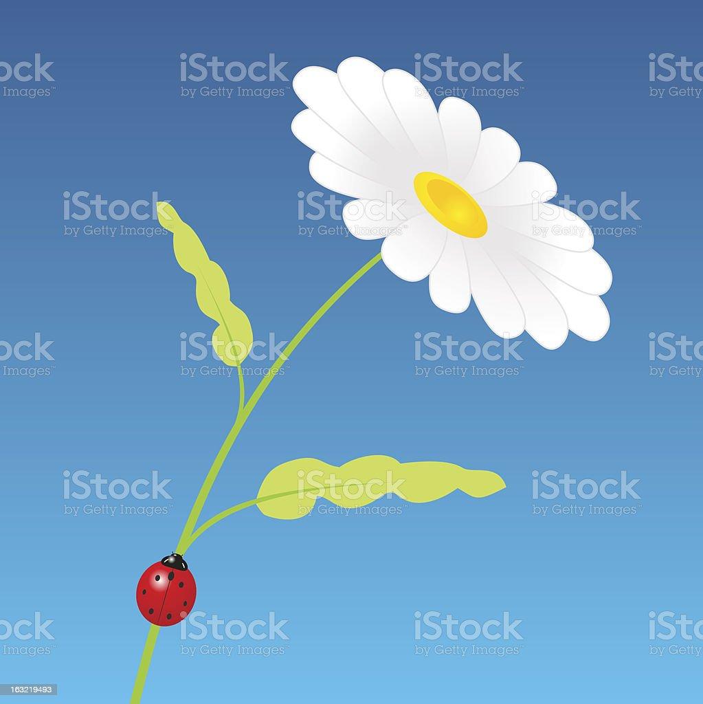 Chamomile vector art illustration