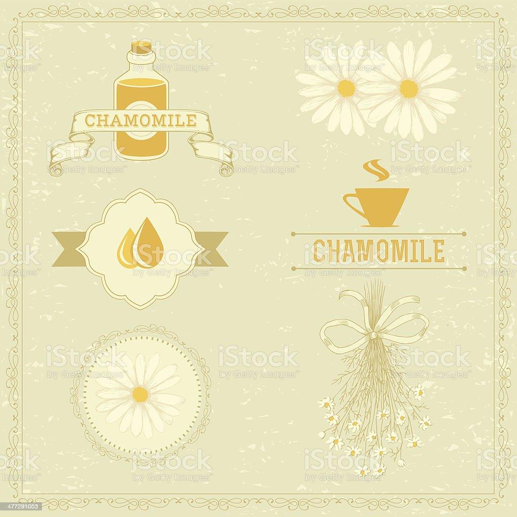 chamomile, vector art illustration