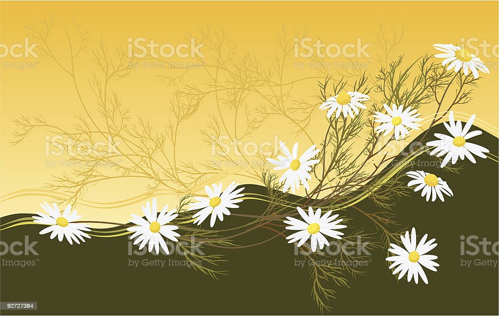 chamomiles royalty-free stock vector art