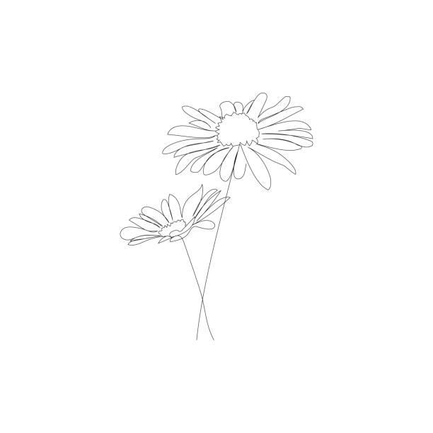 bildbanksillustrationer, clip art samt tecknat material och ikoner med chamomiles - vektorlinje ritning. - summer sweden