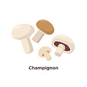 Champignon mushrooms isolated on white background, vector illustration in flat design. Group of portobello mushrooms