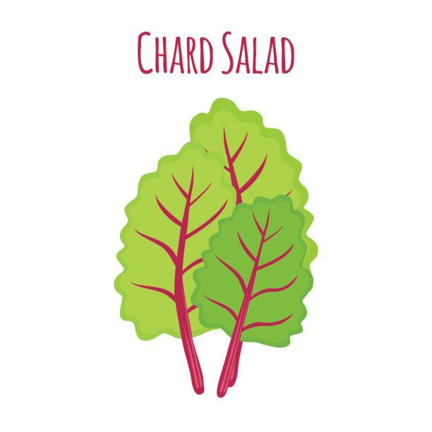 540 Swiss Chard Illustrations Clip Art Istock