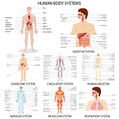Chart of different Human Organ System