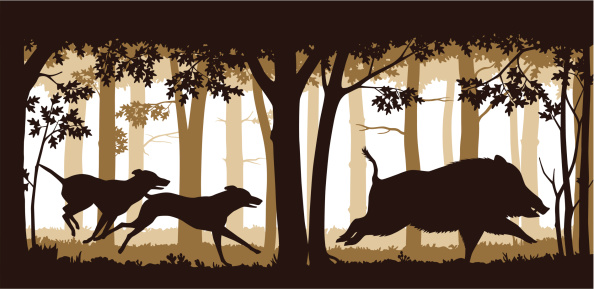 Chasing The Wild Boar