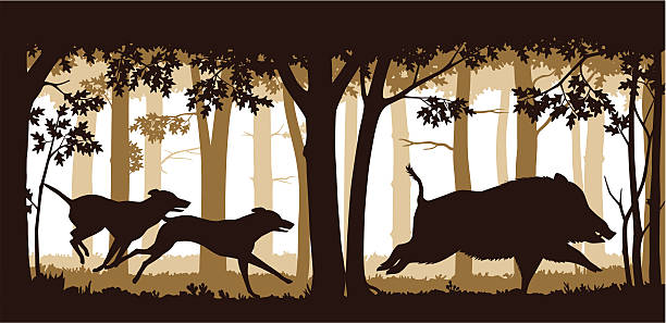 stockillustraties, clipart, cartoons en iconen met chasing the wild boar - roofdieren