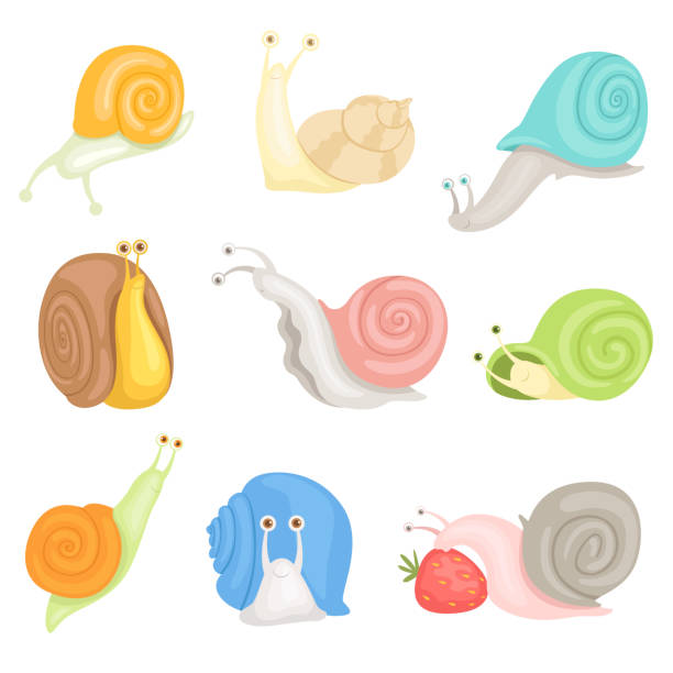 cheerful little garden snails set, cute clams with colorful shells vector illustrations on a white background - snail stock illustrations