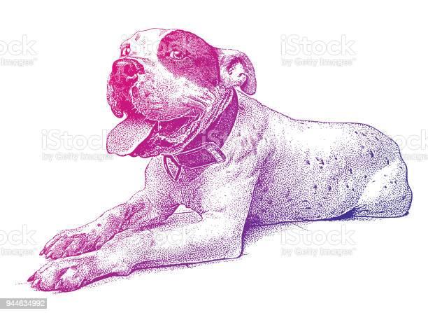 Cheerful pit bull terrier vector id944634992?b=1&k=6&m=944634992&s=612x612&h=s0yp9wgp5w9j o1jwd jqxecw o3gsac7txpt8l09ks=