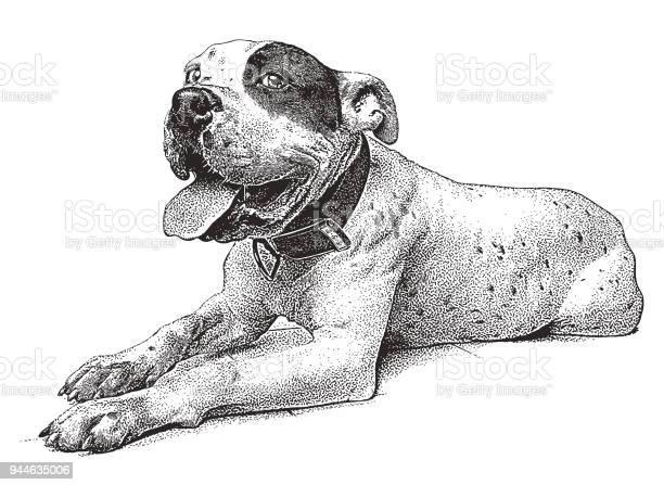 Cheerful pit bull terrier vector id944635006?b=1&k=6&m=944635006&s=612x612&h=t3zmwwm2exhvnem1bdhelq78763ordfddjgju6sv048=