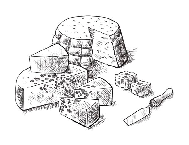 cheese making various types of cheese set of vector sketches vector art illustration