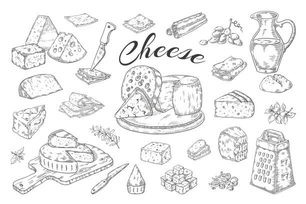 Cheese sketch. Hand drawn milk products, gourmet food slices, cheddar Parmesan brie. Vector breakfast vintage illustration Cheese sketch. Hand drawn milk products, gourmet food slices, cheddar Parmesan brie. Vector breakfast vintage illustration pencil hand drawn mozzarella stock illustrations