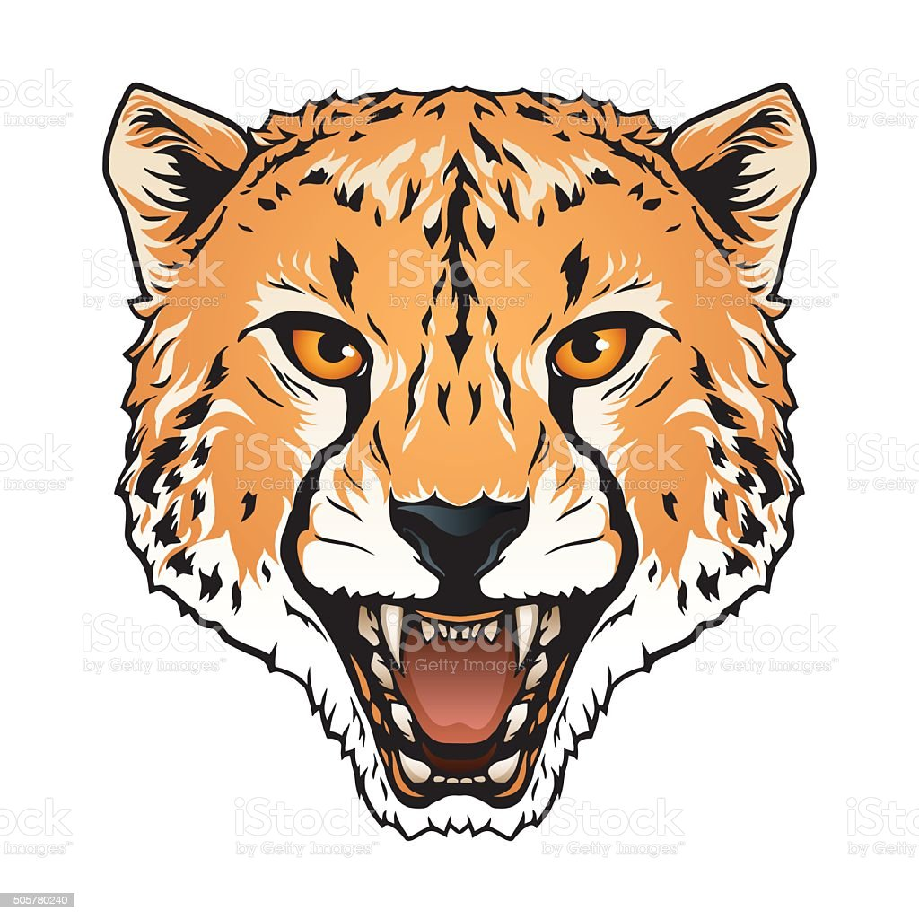royalty free cheetah eyes clip art vector images illustrations rh istockphoto com cheetah clipart pictures cheetah clipart pictures