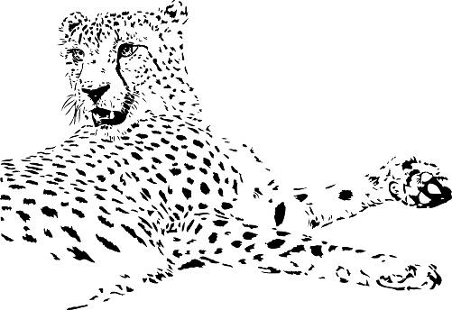 Cheetah illustration in black lines
