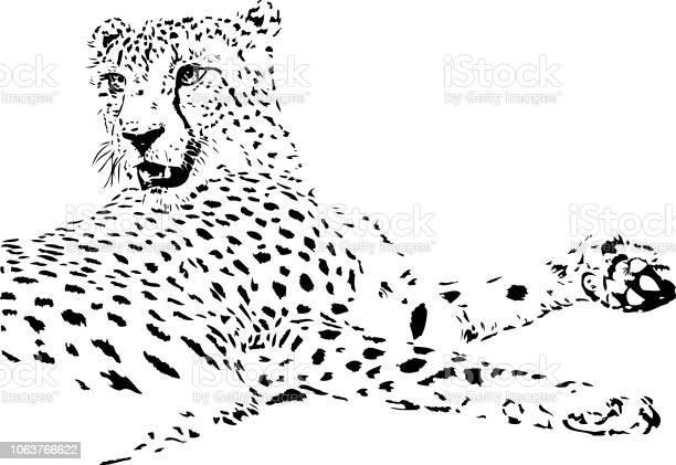 Cheetah illustration in black lines vector id1063766622?b=1&k=6&m=1063766622&s=612x612&h=bj4 dwrpmaoa6hvrhlleyw2bv7qlr5  n7pt hxbh64=