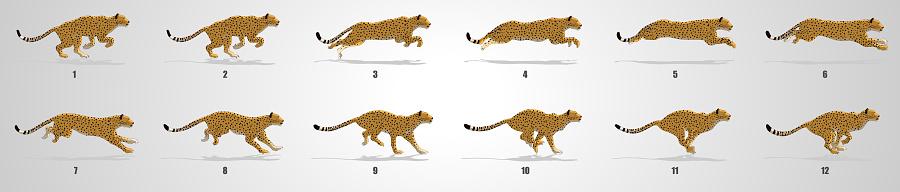 Cheetah Run cycle animation Sequence