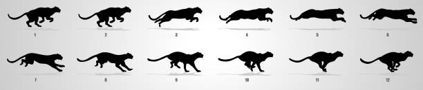 Cheetah Run cycle animation Sequence Cheetah Running animation frames and sprite sheet sequential series stock illustrations
