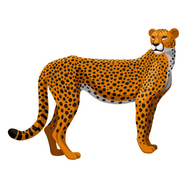 stockillustraties, clipart, cartoons en iconen met gepard - jachtluipaardwelp