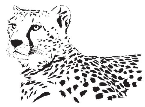 Cheetah vector