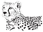 istock Cheetah vector 165502900