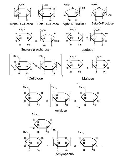 Chemical structural formulas of basic carbohydrates Chemical structural formulas of basic carbohydrates, 2d, vector, eps 8 carbohydrate biological molecule stock illustrations
