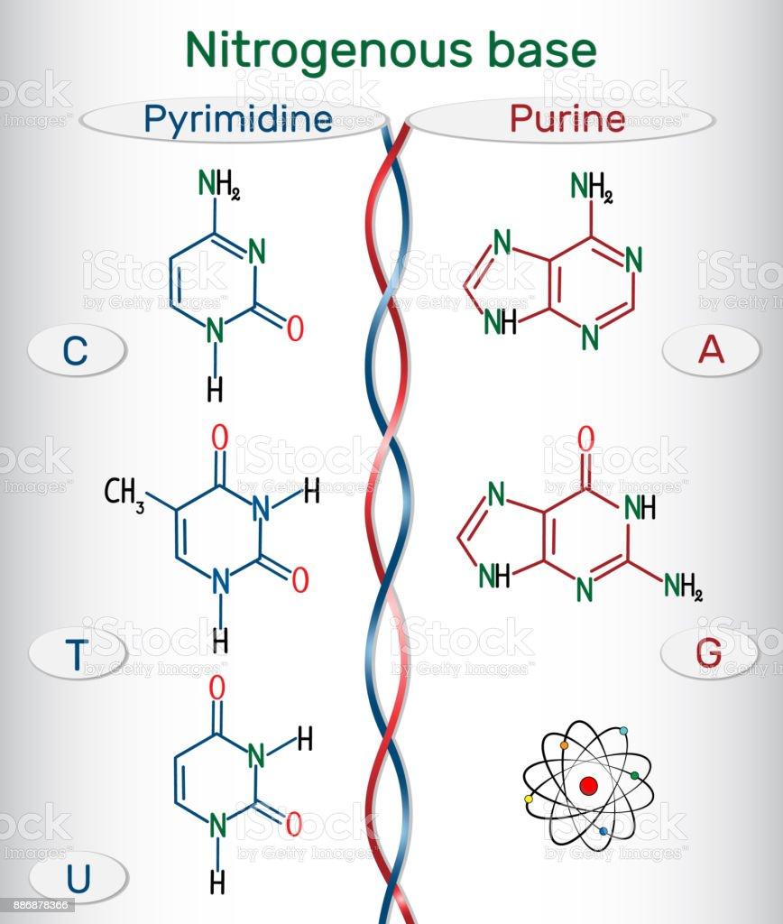 Ilustración De Fórmulas Químicas Estructurales De Purina Y