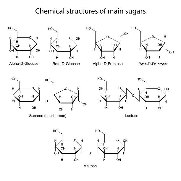 Chemical structures of main sugars: mono- and disaccharides Chemical structures of main sugars: mono- and disaccharides, 2d illustration, isolated on white background, skeletal style, vector, eps8 carbohydrate biological molecule stock illustrations