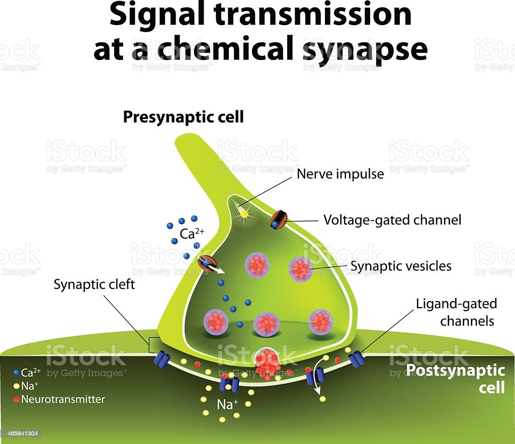 Chemical Synapse Stock Vector Art More Images Of 2015 465841304