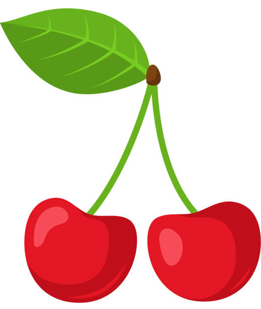 Cherry berries. Colorful design element isolated on white. Eps 10 vector illustration. cherry stock illustrations