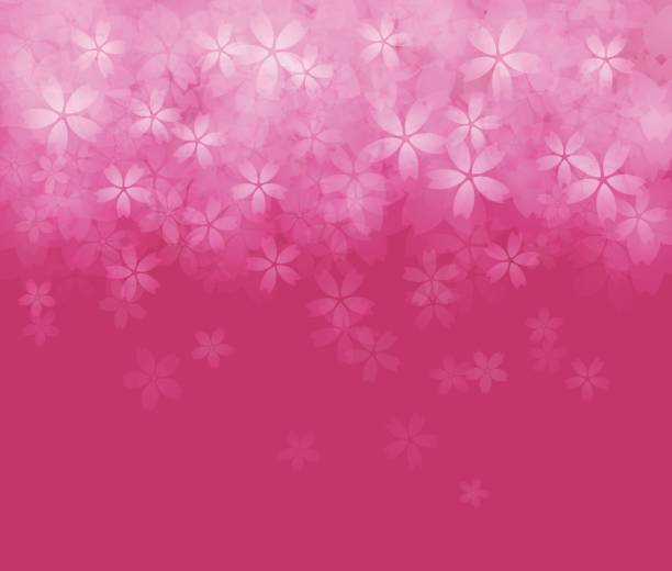 bildbanksillustrationer, clip art samt tecknat material och ikoner med cherry blossom bakgrundsbild - rosa bakgrund